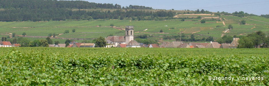 Burgundy-vineyards.jpg