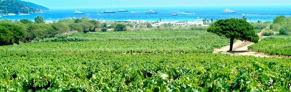St-Tropez-Vineyard.jpg